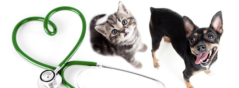 fisioterapia-veterinaria-focinhos-urbanos